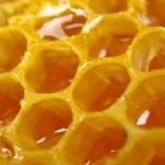 Медовый бизнес, или какие перспективы у пчеловодства как бизнеса