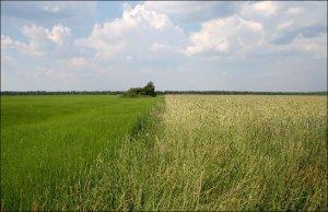 Весной в России начнется полномасштабная земельная реформа