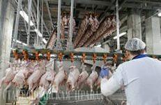 Минсельхоз отмечает существенный прирост производства мяса птицы