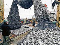Россия сократила квоты на вылов рыбы для Южной Кореи