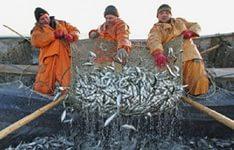 Путин усилил законодательство по ловле рыбы