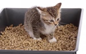 Топливные пеллеты – идеальный материал для кошачьего туалета