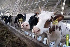 Потери финских фермеров из-за российского продэмбарго составили 400 млн евро