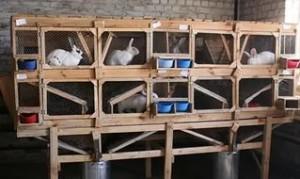 Зарабатываем на выращивании кроликов