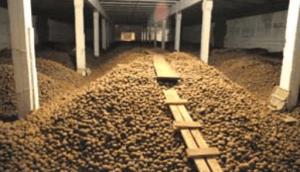 Развитие овощехранилищ поможет в борьбе с инфляцией