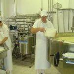 Как начать производство сыра в мини цехе в качестве бизнеса