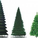 Инвестиции в быстрый заработок: продажа новогодних елок