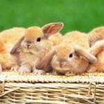 Как правильно организовать выращивание кроликов?