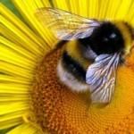 Бизнес-план по развитию пчеловодства