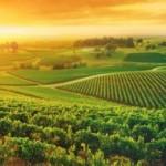 Проблемы частной земельной собственности в РФ