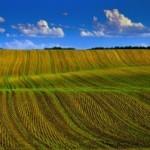 Инвестиции в сельскохозяйственные земли Великобритании