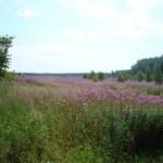 Формирование инвестиционного потенциала земельного рынка РФ