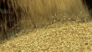 В РФ начнут действовать пошлины на экспорт пшеницы