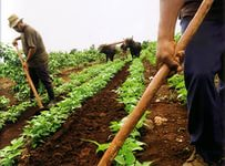 Экономика Кубы получит 400 млн долл. от британцев