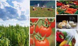 Россия наращивает сотрудничество с Израилем в сельскохозяйственной сфере