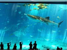 Океанариум «Москвариум» – проведите время интересно и с пользой