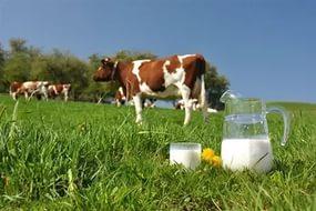 Производство молока нуждается в государственной поддержке