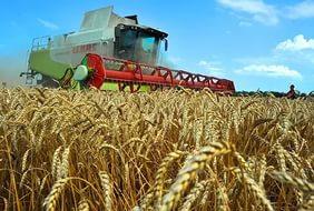 Сельхозпроизводители Краснодарского края получат государственную помощь