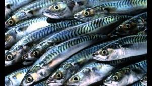 Наращивание производства рыбы в Российской Федерации