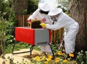 Пчеловодство – традиционно выгодный бизнес