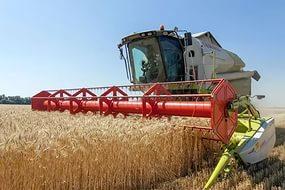 Последние данные об урожае зерна в России