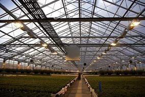 В Ростовской области будут построены теплицы площадью 20 гектар