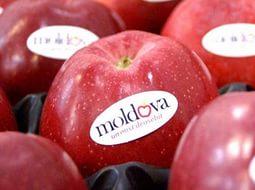 Россельхознадзор планирует увеличить контроль продуктов, ввозимых из Молдавии