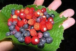 Прирост производства плодов и ягод в 2015 году