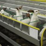 Грамотно составленный бизнес-план по разведению кроликов – залог успешного развития дела