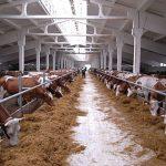 Бизнес-план по открытию сельскохозяйственной фермы